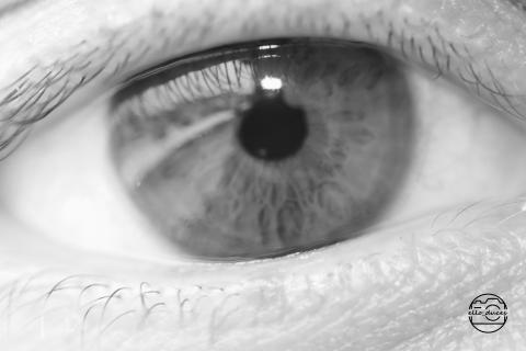 Seeing Through Their Eyes