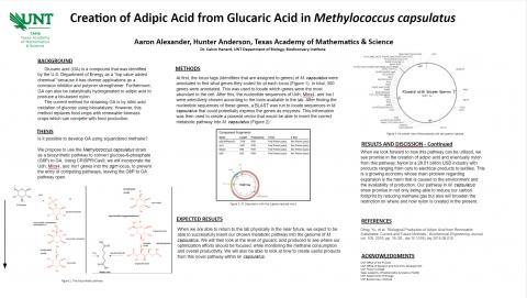 Creation of Adipic Acid from Glucaric Acid in Methylococcus capsulatus