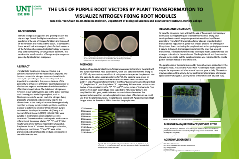 The Use of Purple Root Vectors by Transformation to Visualize Nitrogen Fixing Nodules
