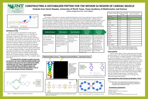 Constructing a Destabilizer Peptide for the Myosin S2 Region of Cardiac Muscle