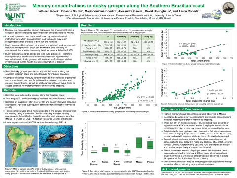 Mercury concentrations in dusky grouper along the Southern Brazilian coast