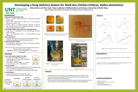 Developing a Drug Delivery System for Shell-less Chicken Embryo, Gallus domesticus