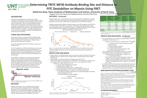Determining TRITC MF30 Antibody Binding Site and Distance to FITC Destabilizer on Myosin Using FRET