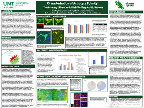 Characterization of Astrocyte Polarity
